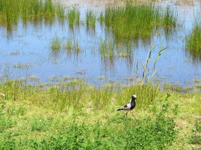 Sedgefield wetlands